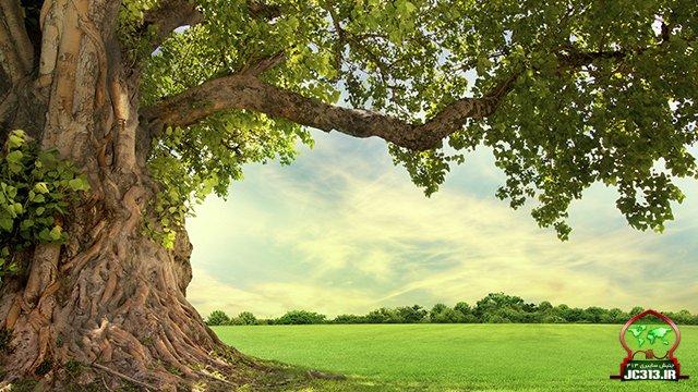 کلیپ / این درخت تاریخ رو عوض کرد!